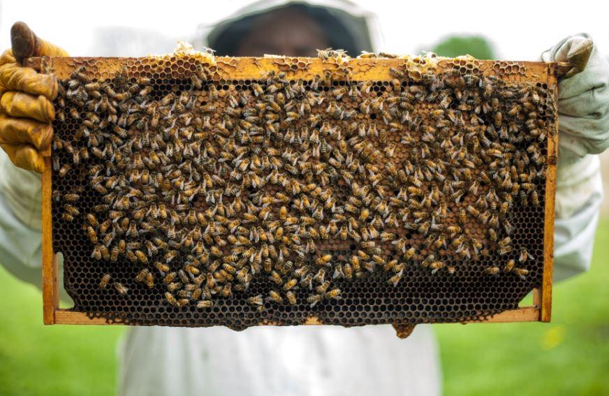 Le api continuano a morire: ecco quali iniziative sono in campo
