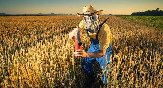 Pesticidi grano