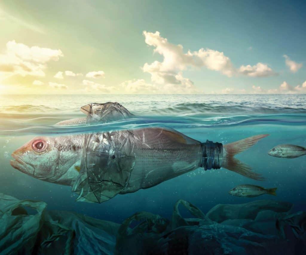 Addio alla plastica nei supermercati: la rivoluzione green inizia nel Regno Unito