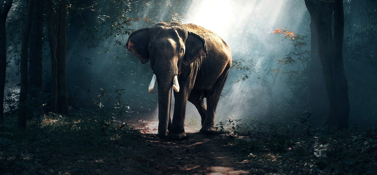 Sì, l'Intelligenza Artificiale può aiutare a salvare le specie in estinzione