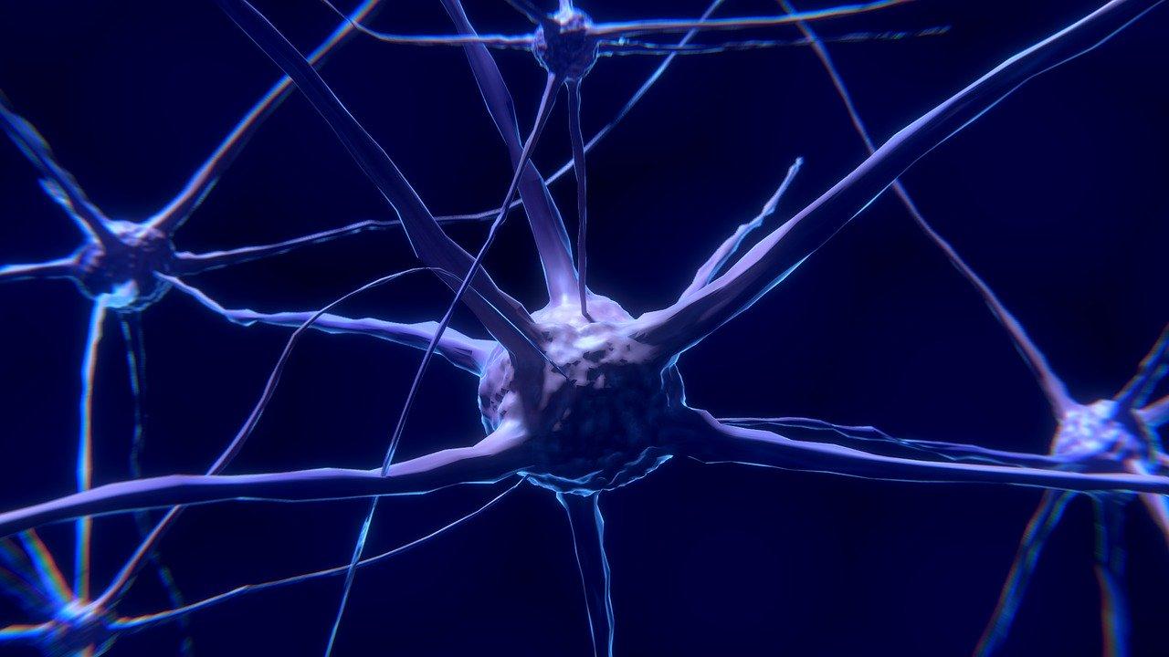 I neuroni bionici potrebbero riparare i circuiti cerebrali difettosi. Il punto