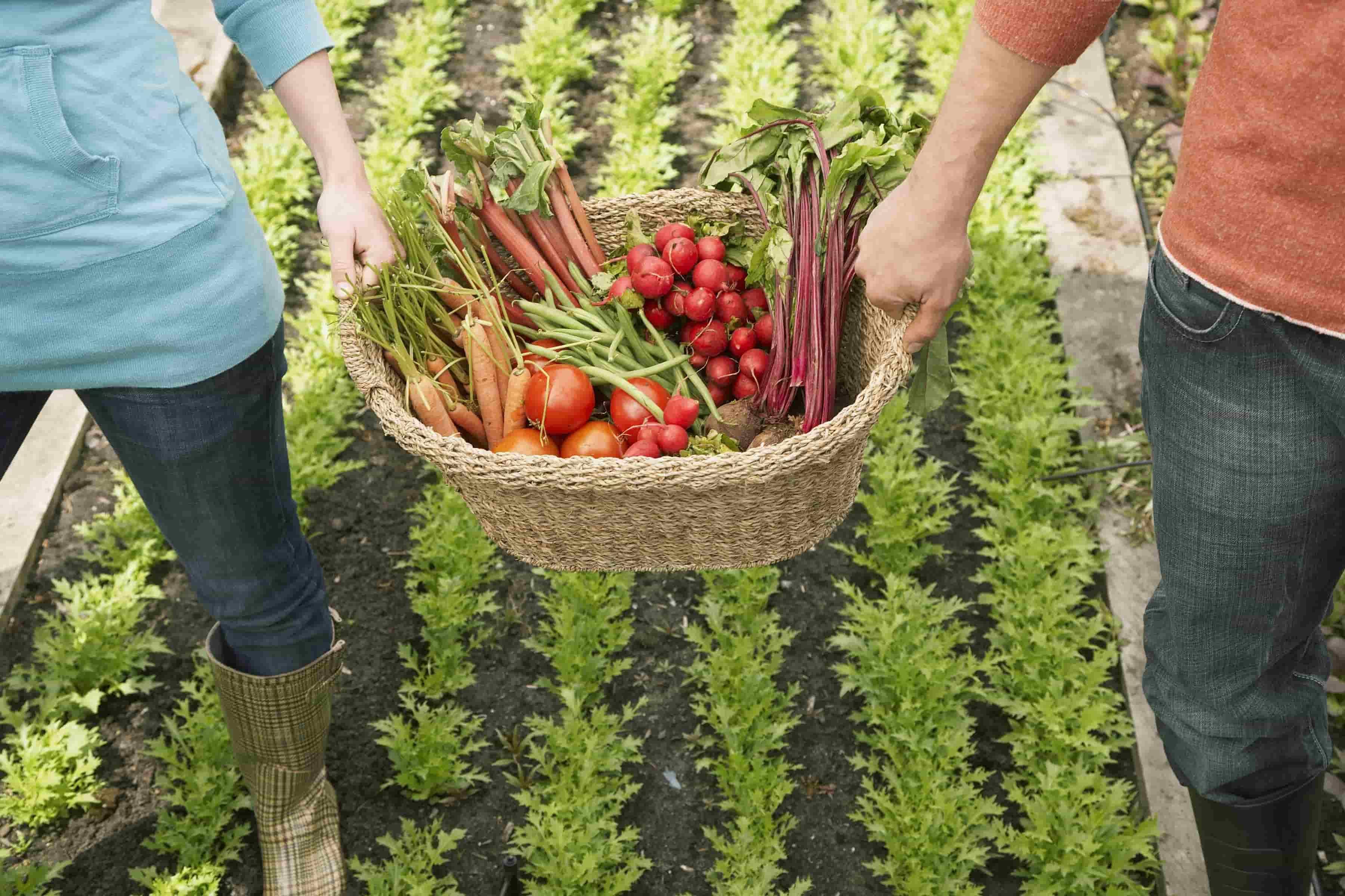 Storie di cibo e sostenibilità: 10 documentari sul food che dovresti vedere