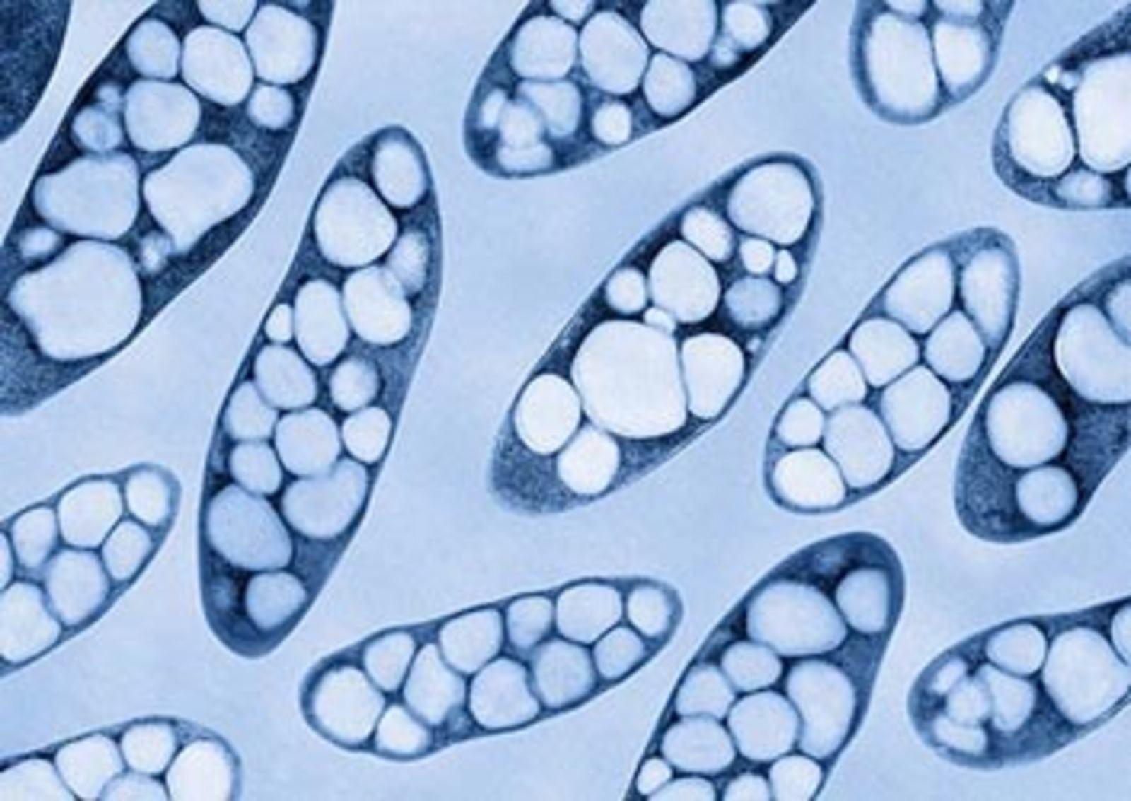 plastica biodegradabile-batteri-pha