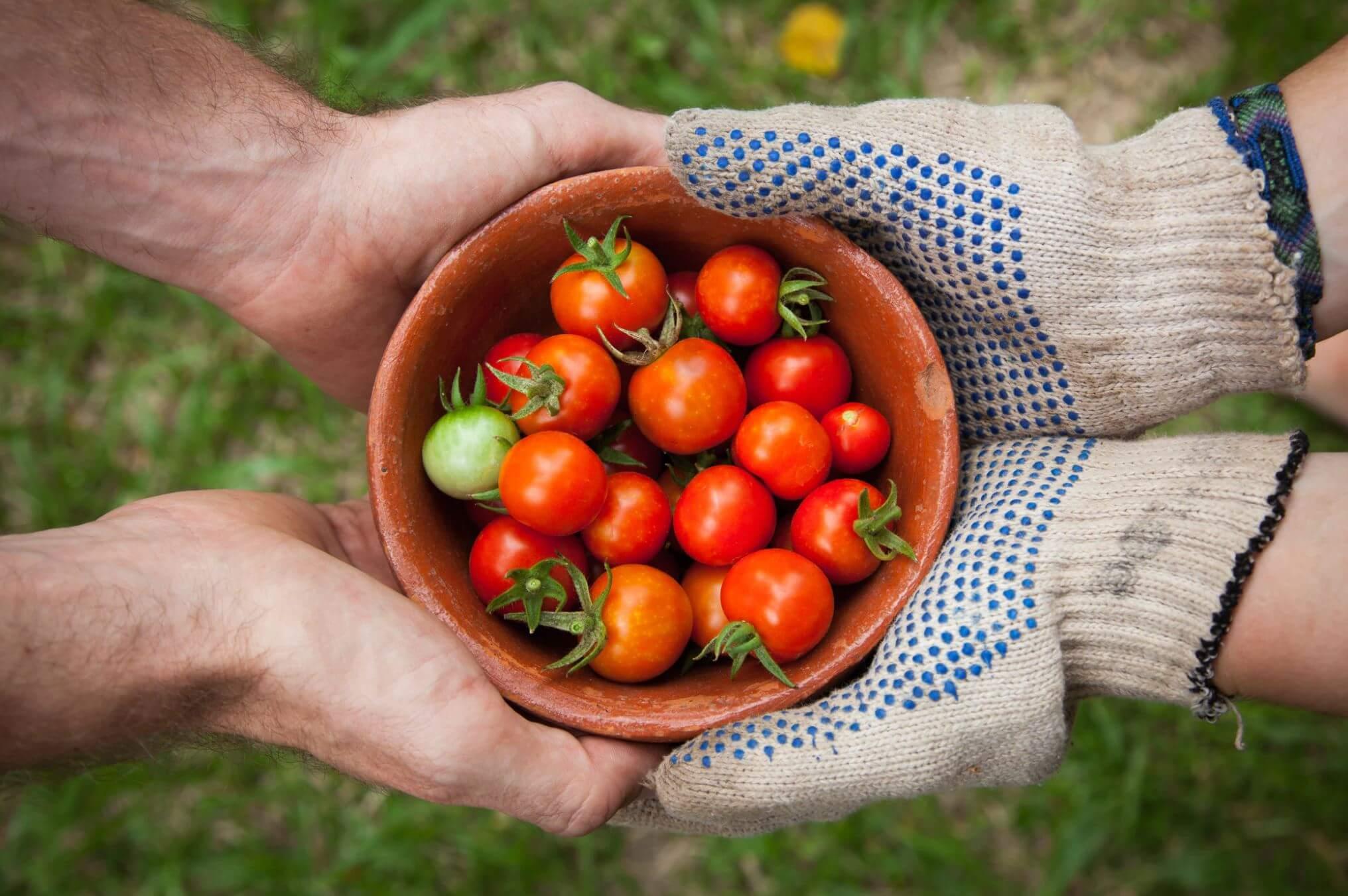 agricoltura sostenibile