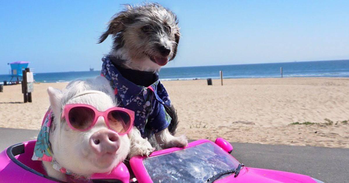 Fenomeno Pet influencer: ecco chi sono gli animali più seguiti di Instagram