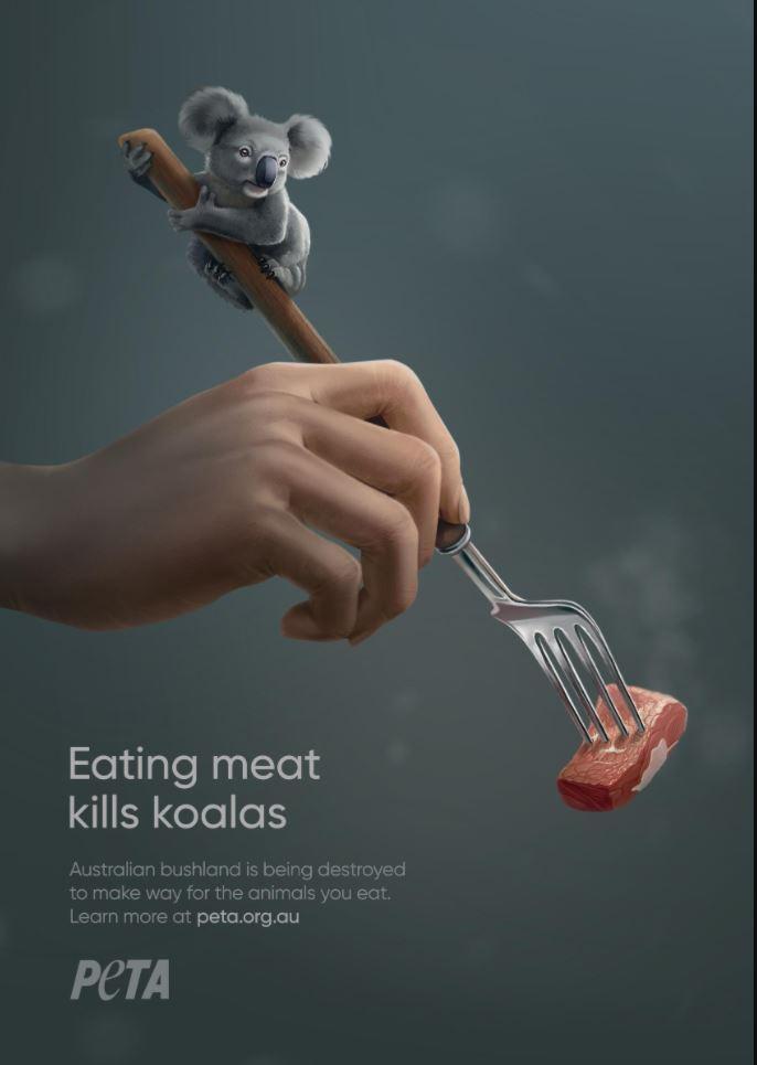 eating meat kills koala